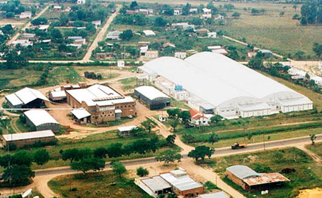 plantagoya